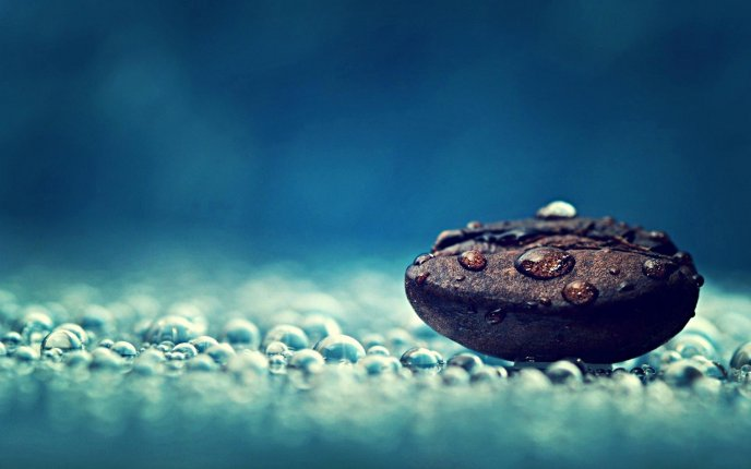 Macro water drops on a bean on coffee - HD wallpaper