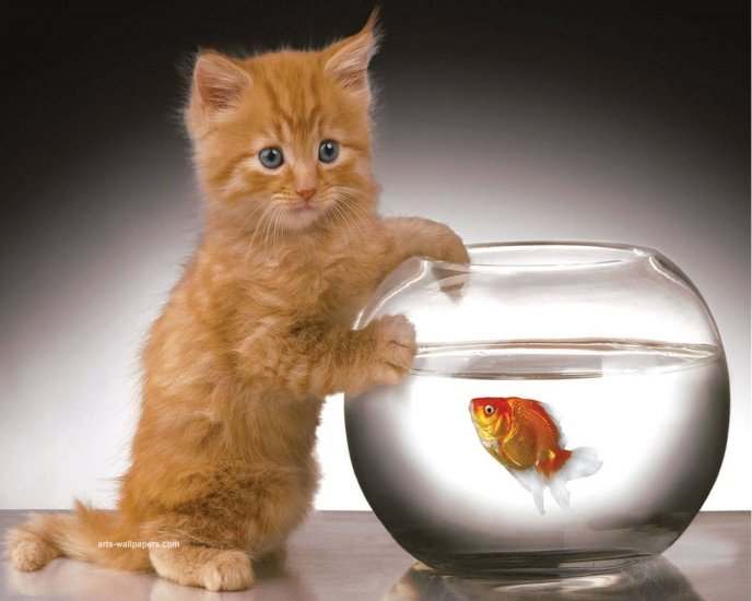 Little Golden Cat And The Fish Hd Wallpaper