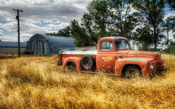 Old orange truck in the middle on the wheat