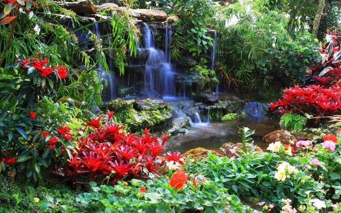 Beautiful red flowers near the waterfall