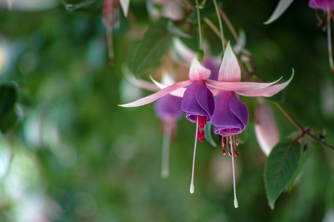 Download Wallpaper Interesting flowers in the trees - Bellflowers