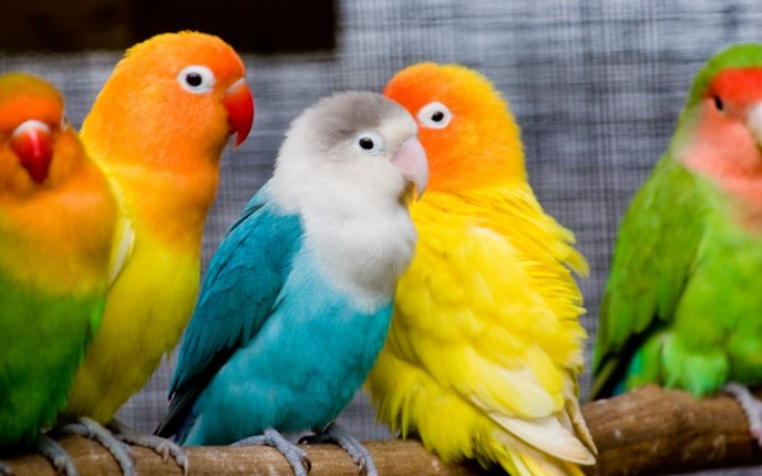 Beautiful little colorful parrots - Sweet birds