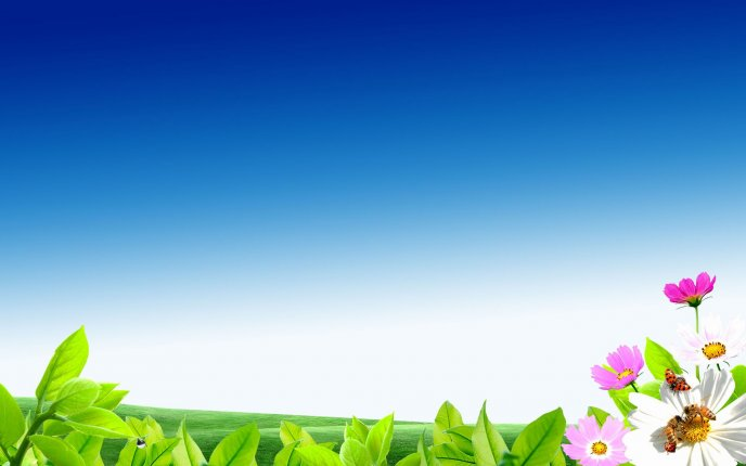 Digital art - green field with flowers and blue sky