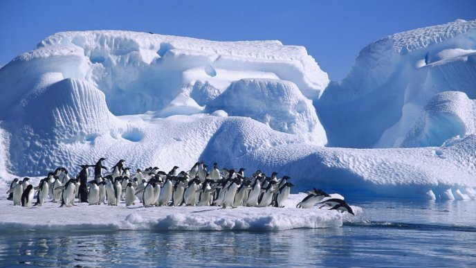 A lot of penguins on ice - Blue HD wallpaper