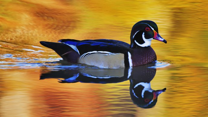 Download Wallpaper A beautiful colorful duck on the lake