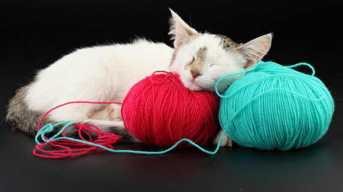 Download Wallpaper A sweet cat fell asleep on balls of thread