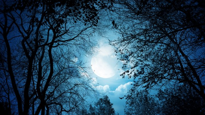 Download Wallpaper Beautiful night at the moonlight