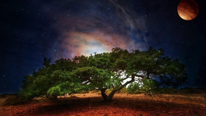 Giant Tree Under Moonlight In Night