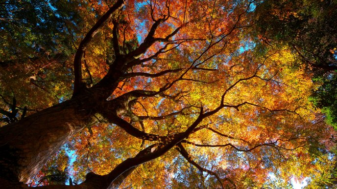 Giant tree with colorful leaves in forest