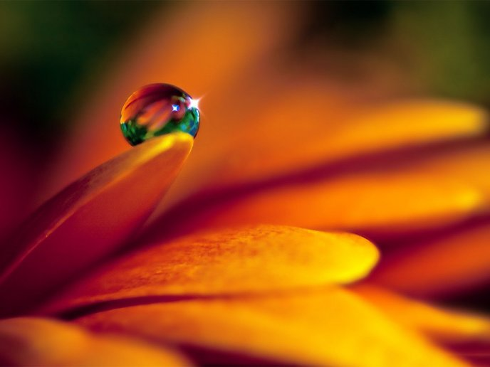 Colourful drop of water on a beautiful orange flower