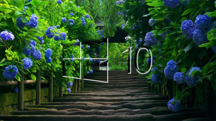 Windows 10 logo on a alley with many blue flowers