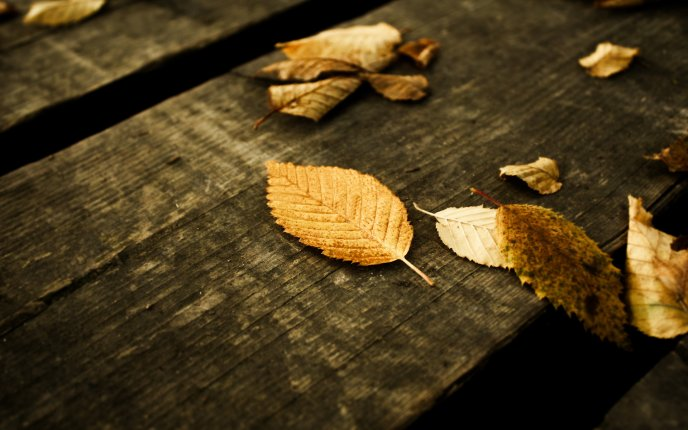 Download Wallpaper Autumn leaves on a bench of wood in the park