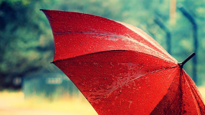 Beautiful red umbrella full with water drops