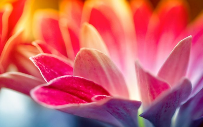 Wonderful pink flower - macro petals