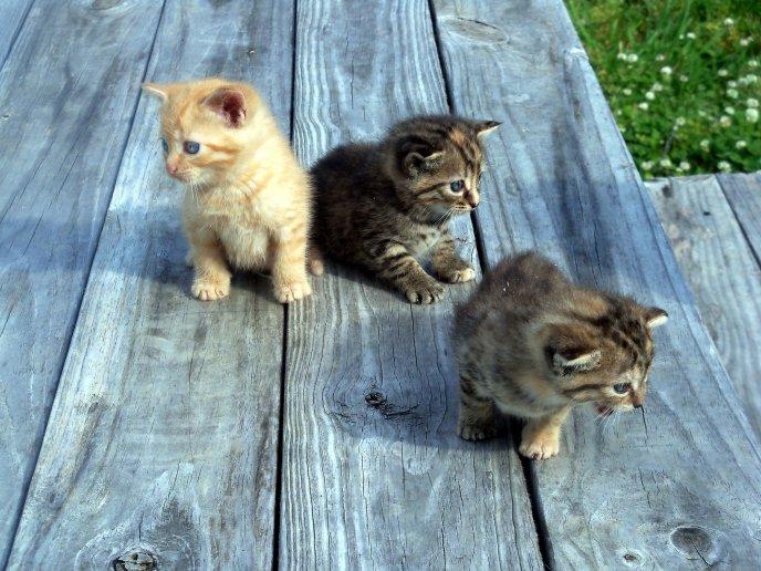 Three sweet little cats , HD animals wallpaper