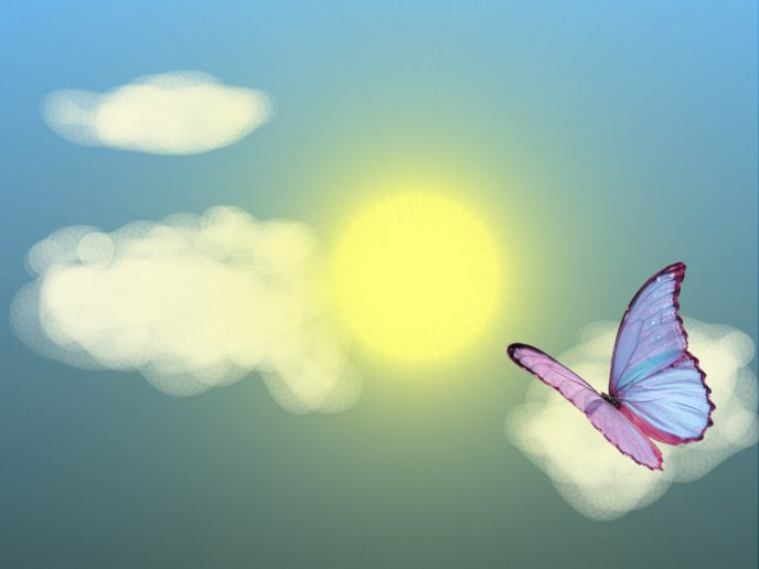 Colored butterfly on a cloud- summer hot day