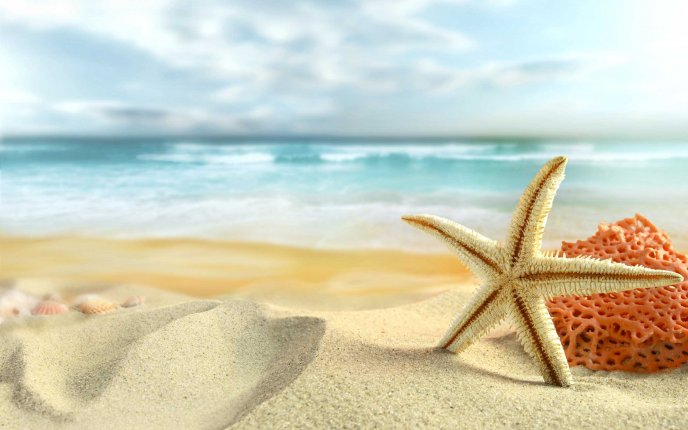 Download Wallpaper Starfish on the golden sand - Wonderful summer holiday