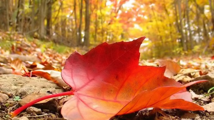 One big Autumn leaf on the ground - HD wallpaper