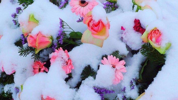 Pink flowers full with snow wonderful spring garden mightylinksfo