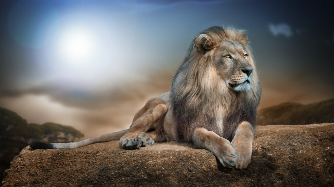Leon King - The most famous wild animal