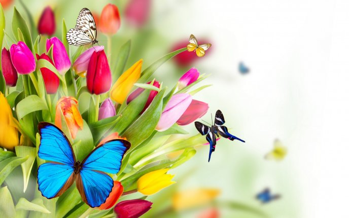 Butterflies on the colourful spring flowers hd wallpaper mightylinksfo