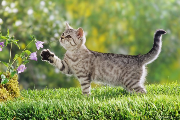 Little Tiger Cat Play With Flowers Hd Spring Wallpaper