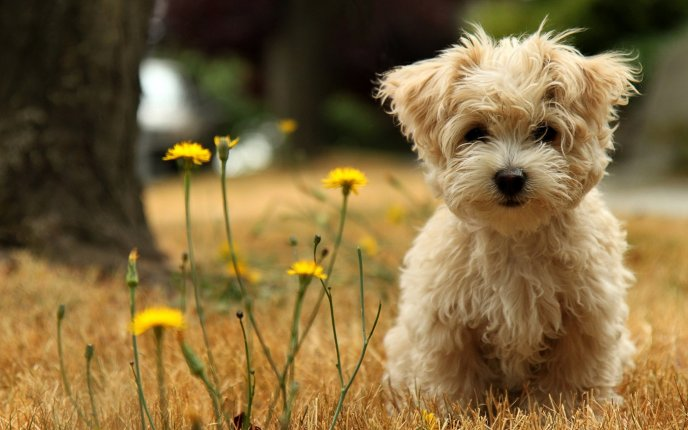 Download Wallpaper Yellow dandelion and browny little dog - HD animal wallpaper