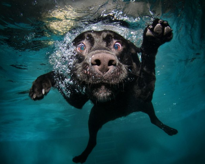 Funny Dog Face Under The Water Hd Macro Wallpaper