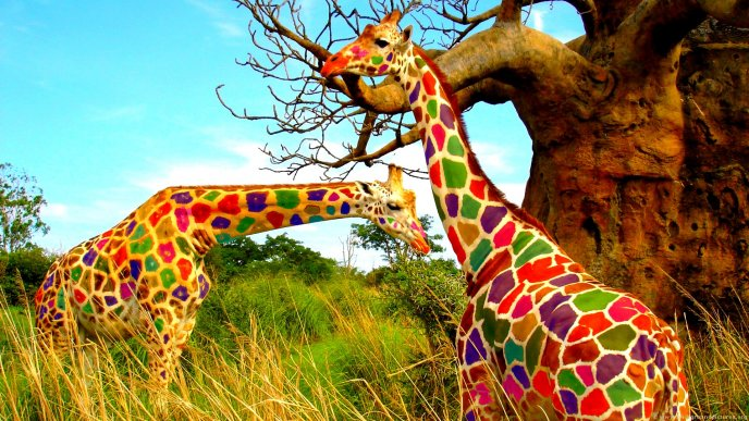 Funny colorful Giraffes in the jungle - HD animal wallpaper