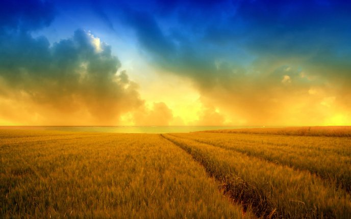 Download Wallpaper Golden wheat field and a beautiful summer sky