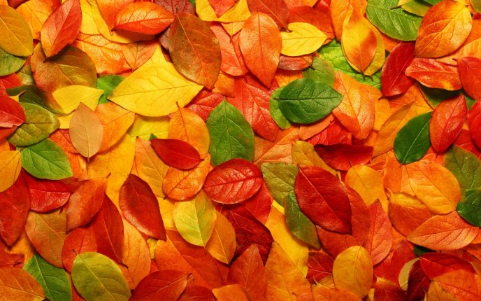 Download Wallpaper Autumn carpet made from colorful leaves - HD wallpaper