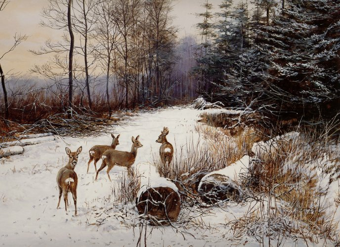 Wild deers in the forest - Winter season