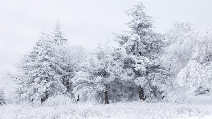 Download Wallpaper Winter white season in the forest - HD wallpaper