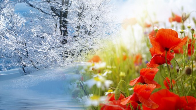 Cold winter and colorful spring - Two wonderful seasons