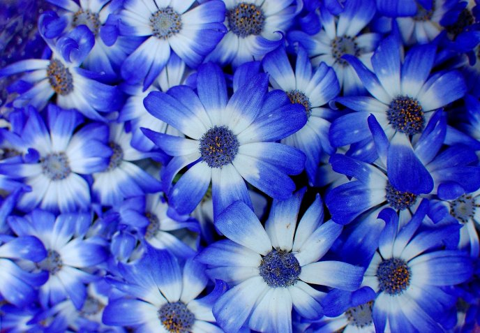 Download Wallpaper Wonderful blue passion on a wallpaper - Flower power