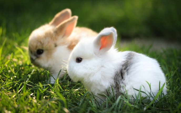 Two little fluffy bunnies in the grass -Happy Easter Holiday