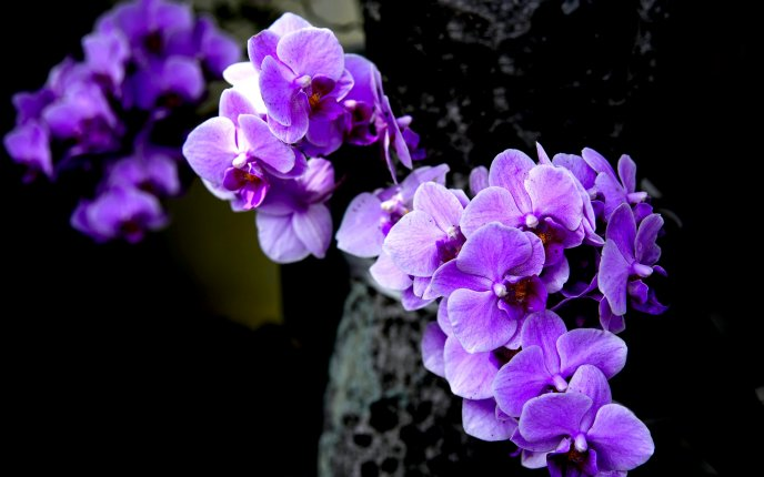 Download Wallpaper Small purple orchid flowers - Wonderful spring time