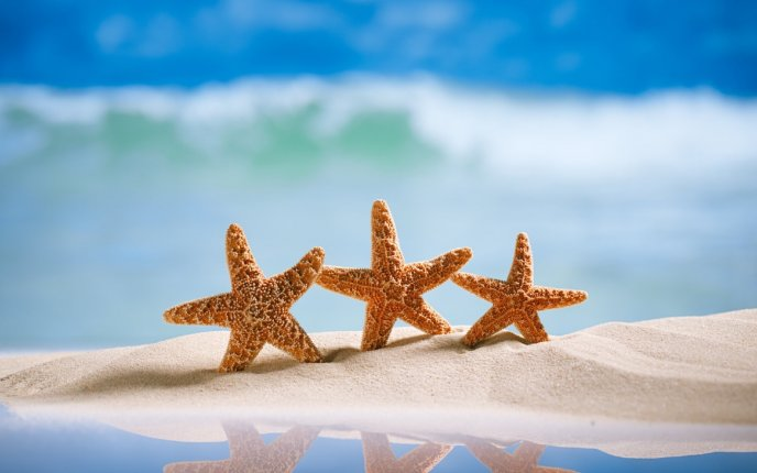 Happy three starfish on the beach - Perfect summer holiday