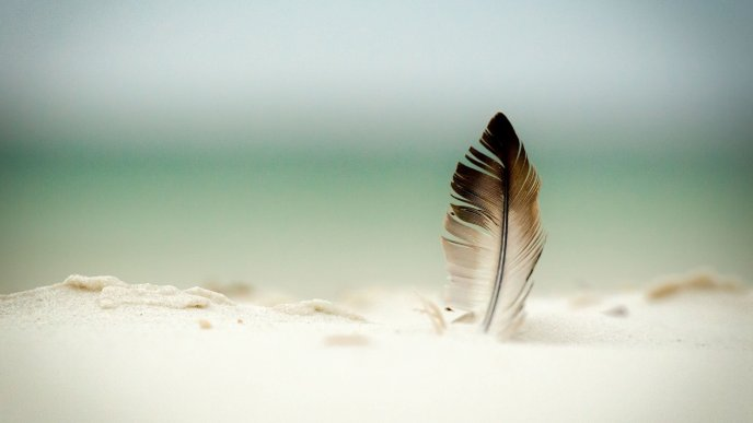 One feather in white sand - HD abstract wallpaper