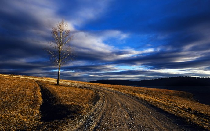 Lonely Tree Without Leaves And Country Road
