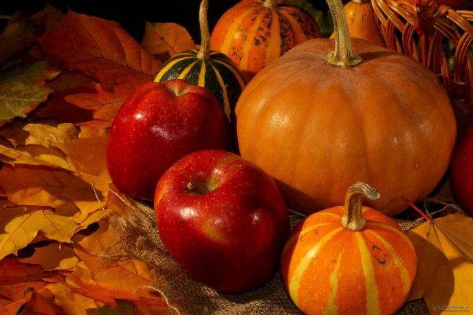 Autumn colors and fruits - Apples and pumpkins