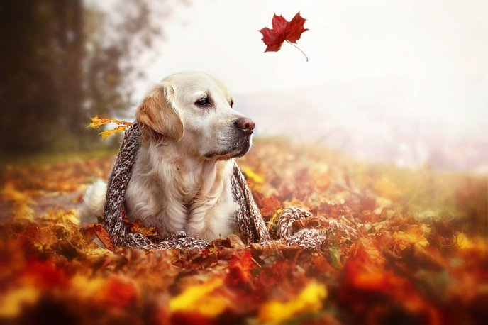 One Autumn leaf in the wind and a beautiful dog relax time