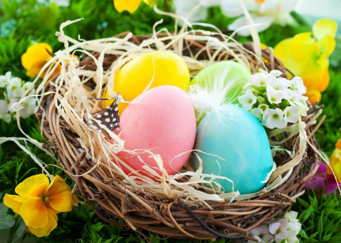Colorful Easter Eggs In A Bird S Nest Happy Holiday