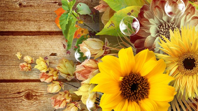 Sunflowers bouquet on the wooden table - Autumn season