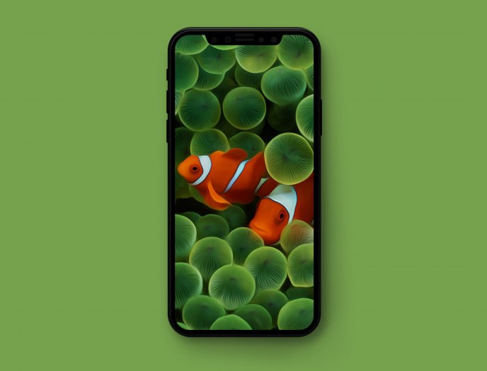 Two Nemo fish on the telephone background - Green iPhone