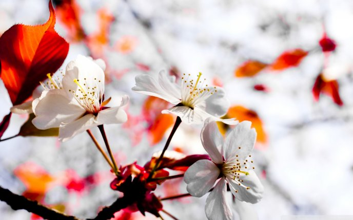 Good morning beautiful Spring flower - Blossom tree