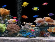 Aquarium with many colorful fish
