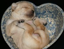 Sweet puppy sleeping in a heart shape