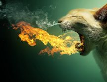 Cat spitting flames - funny wallpaper