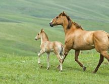A horse with its cub on a field